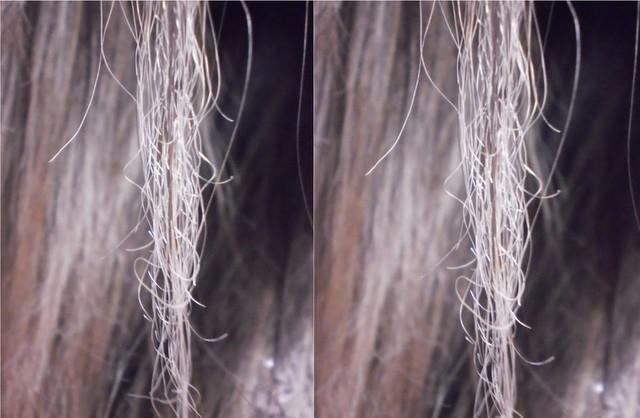 TEXTO 2_hair 4