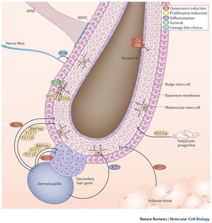 foliyc-blog-habitos-favorecem-tratamento-capilar